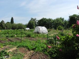 Skinner City Farm Green House