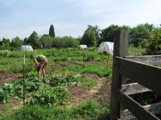 Skinner City Farm Land