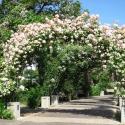 Owen Garden Flower Arch